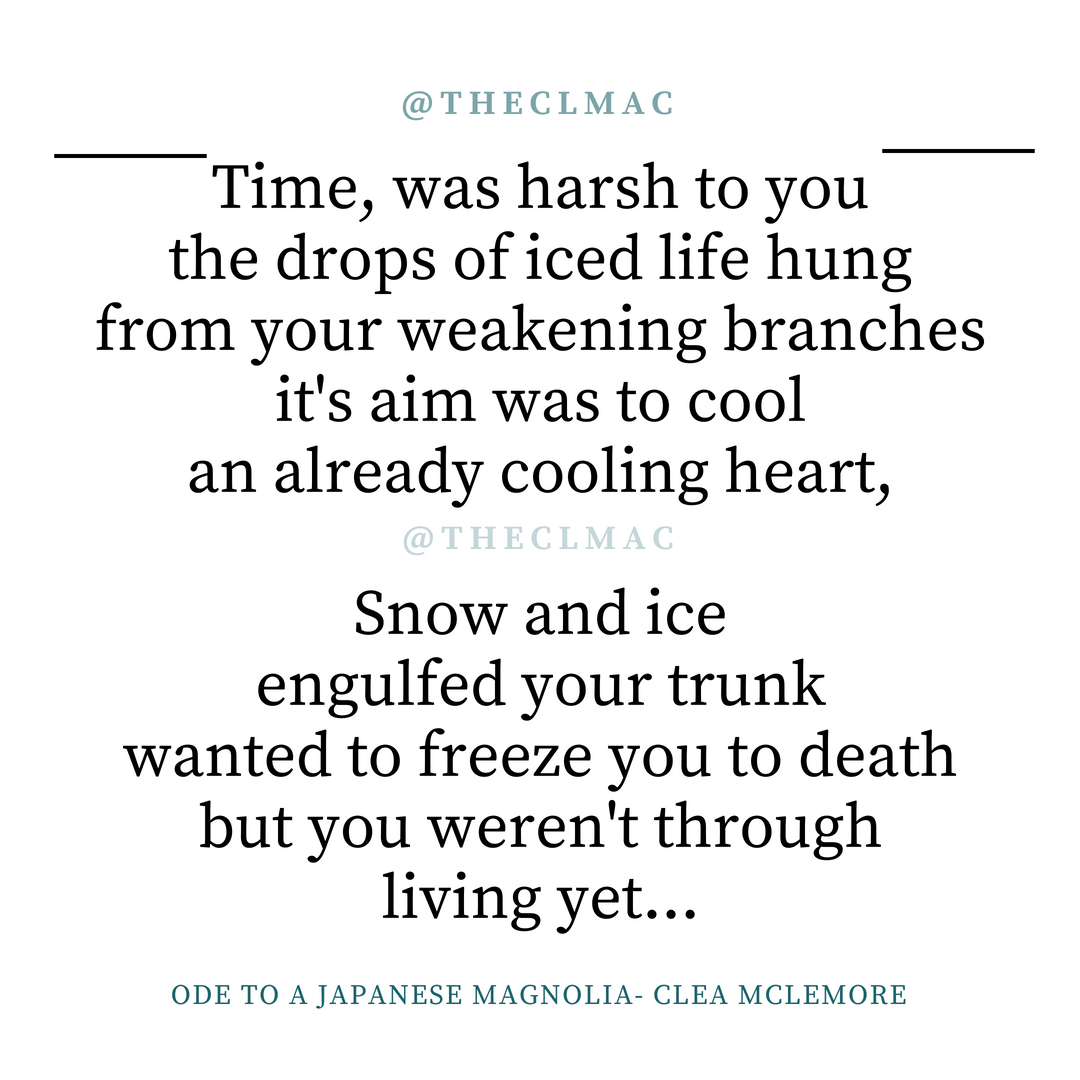 Ode to a Japanese Magnolia, by Clea McLemore