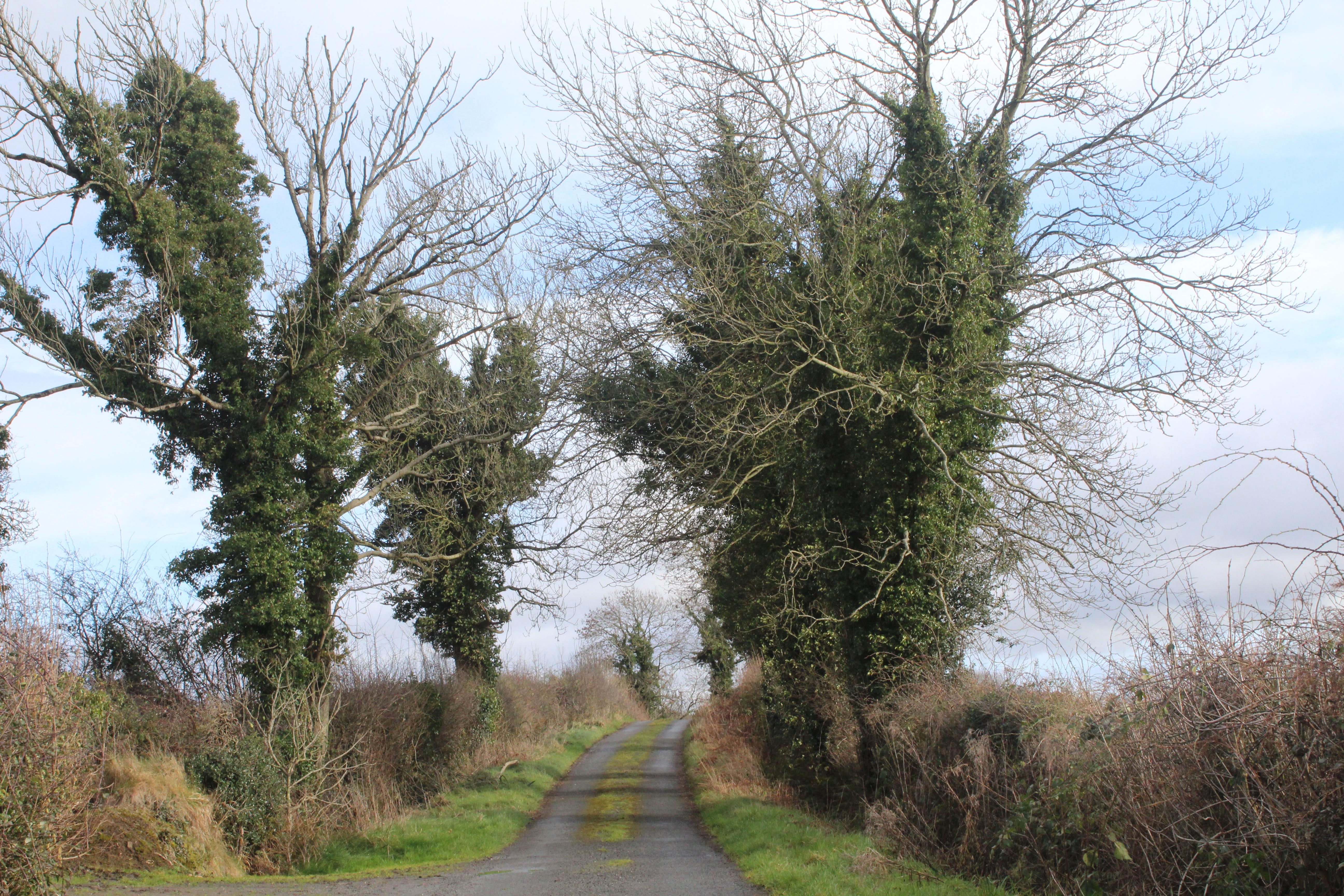 Cavan Ireland Road